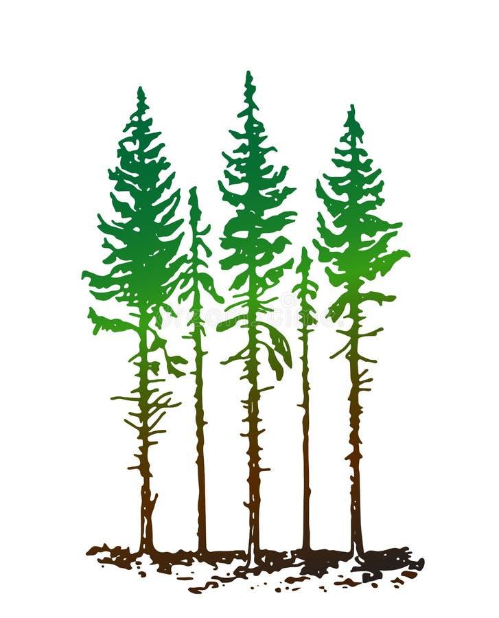 De jonge lange pijnbomen op een witte achtergrond zijn ideaal stock illustratie
