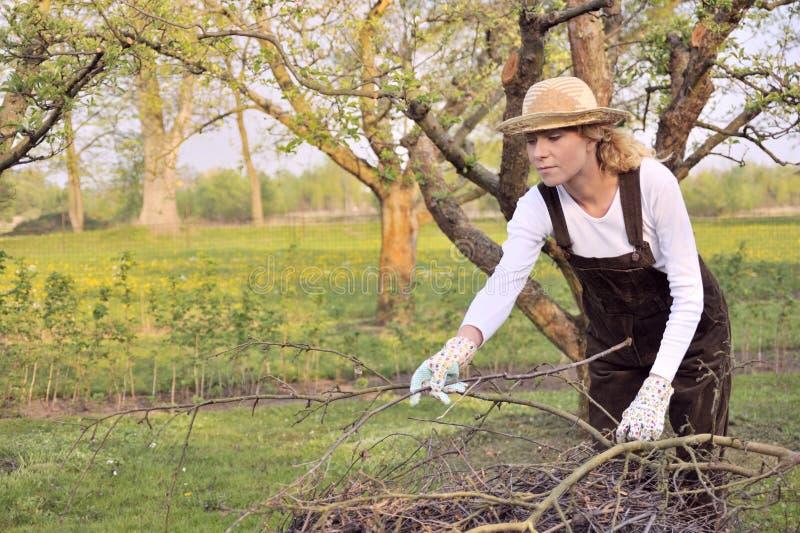 De jonge lidmaten van de vrouwen schoonmakende boom stock fotografie