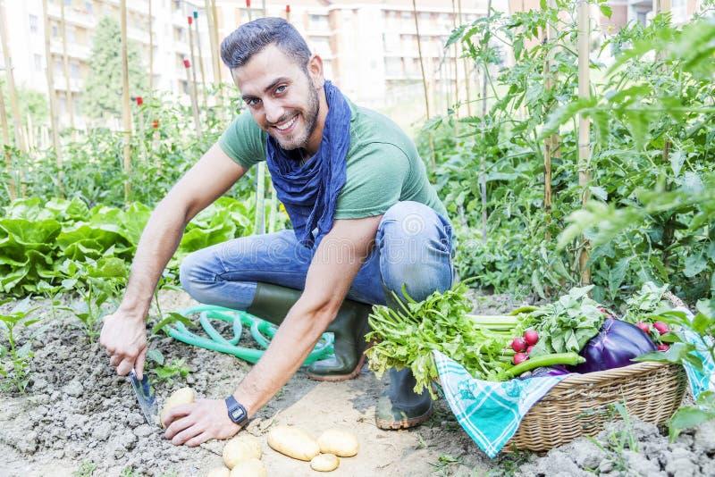 De jonge mens trekt aardappels in de moestuin terug royalty-vrije stock fotografie