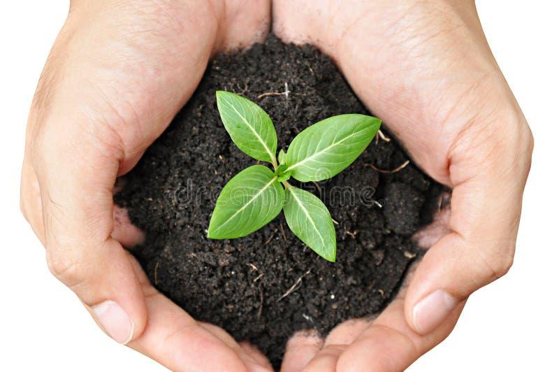 De jonge plant van de handholding met grond royalty-vrije stock afbeeldingen