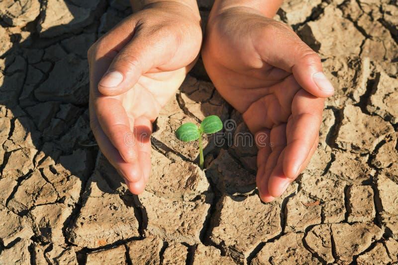 de jonge plant van de twee handbescherming het groeien in dorre grond stock afbeelding