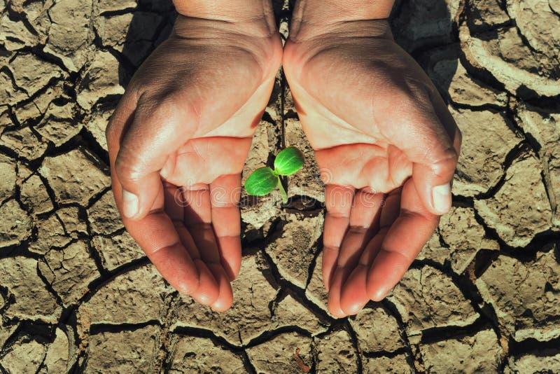 de jonge plant van de twee handbescherming het groeien in grond dor concept stock afbeelding