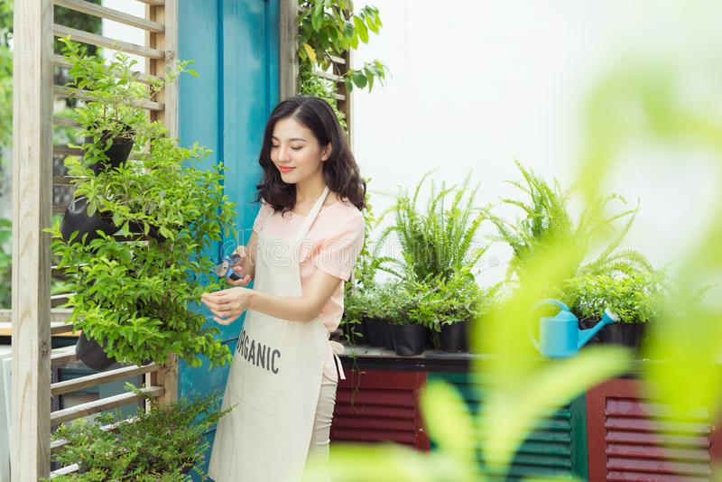 De jonge professionele vrouw in schort sneed groene struikclippers in de tuin royalty-vrije stock foto