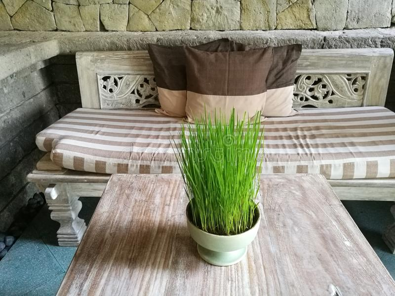 De jonge rijst plant gegroeid als deco, Ubud, Bali royalty-vrije stock foto's
