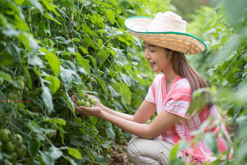 De jonge tomaten van de vrouwenholding in moestuin stock fotografie