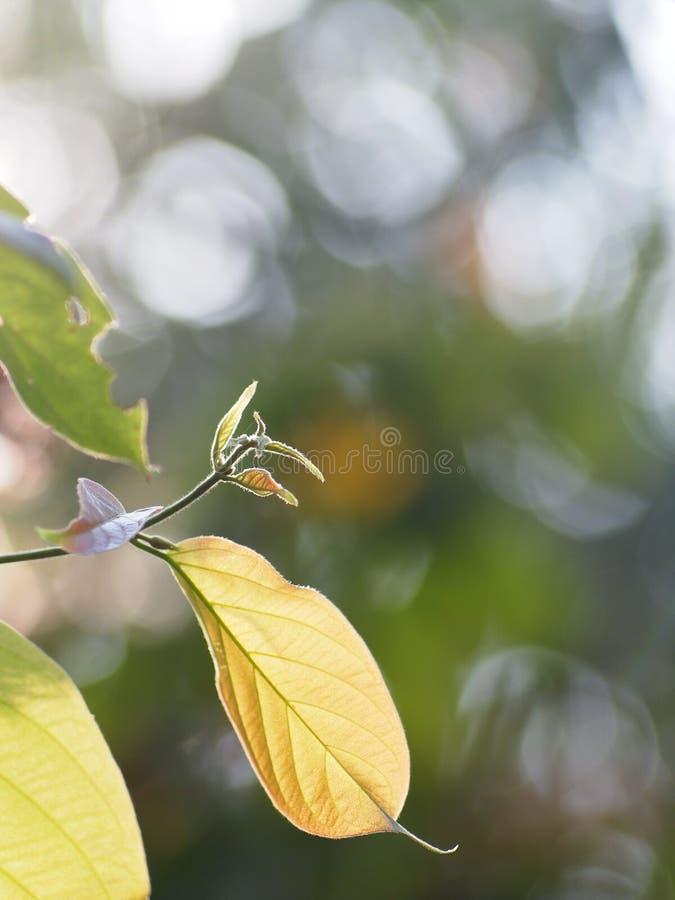 De jonge uiterst kleine groene installatie verlaat ondiepe velddiepte onder natuurlijk zonlicht stock fotografie