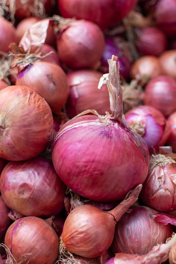 De jonge verse rode ui op markt, nieuwe oogst, sluit omhoog royalty-vrije stock afbeelding