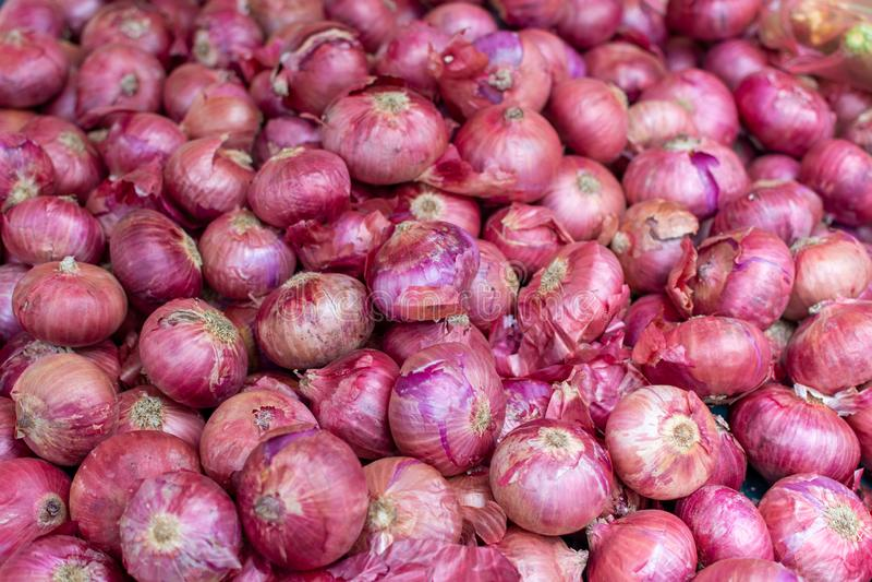 De jonge verse rode ui op markt, nieuwe oogst, sluit omhoog stock foto