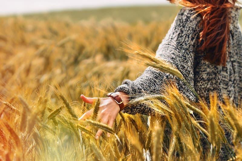 De jonge vrouw dient een tarwegebied als oogstconcept in stock afbeelding
