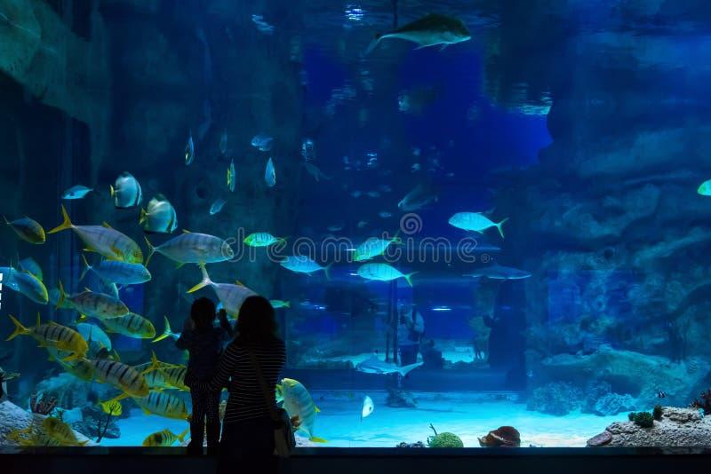 De jonge vrouw met baby let op een vis in aquarium stock afbeeldingen
