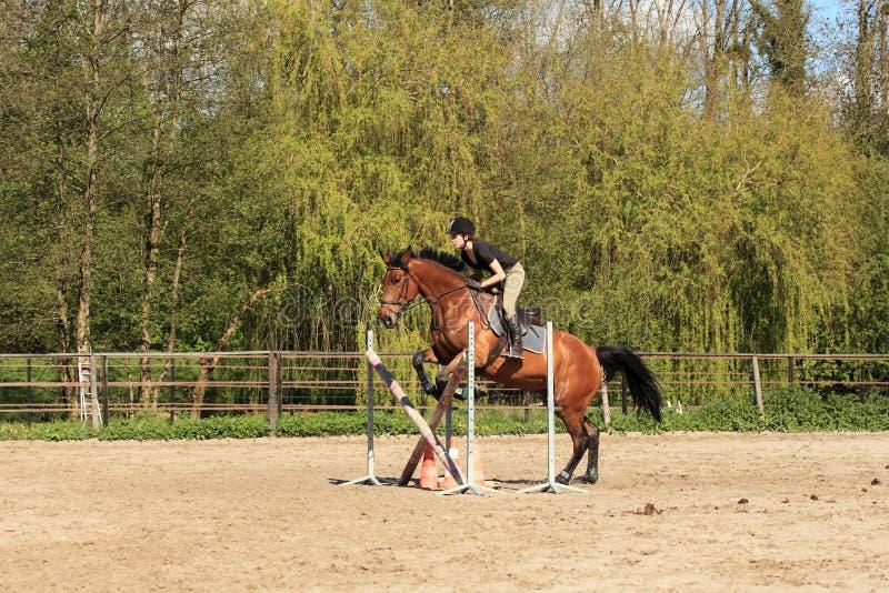 De jonge vrouw met een bruin paard springt een hindernis stock fotografie