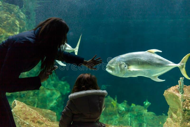 De jonge vrouw met kind let op een vis in aquarium stock afbeelding