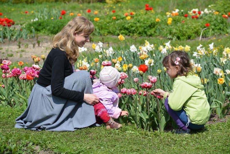 De jonge vrouw met twee kinderen bewondert tulpen in een tuin stock afbeelding