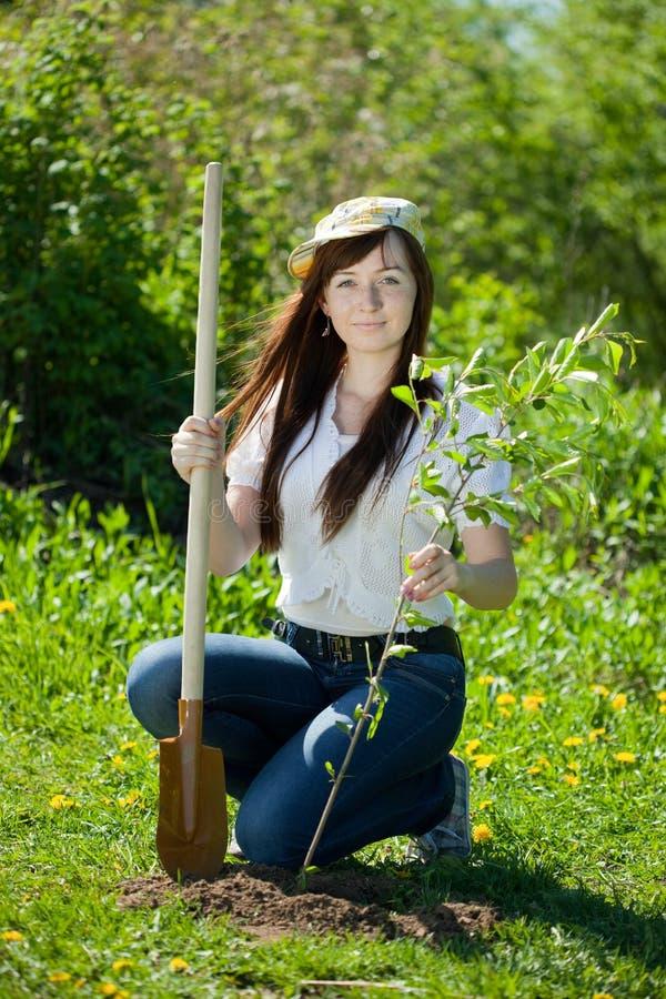 De jonge vrouw plaatst boom stock foto