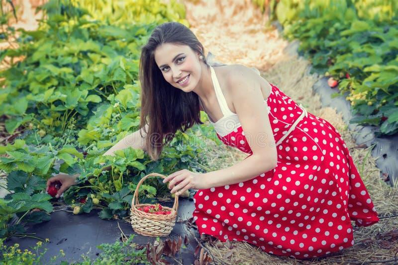 De jonge vrouw verzamelt aardbeien stock afbeeldingen