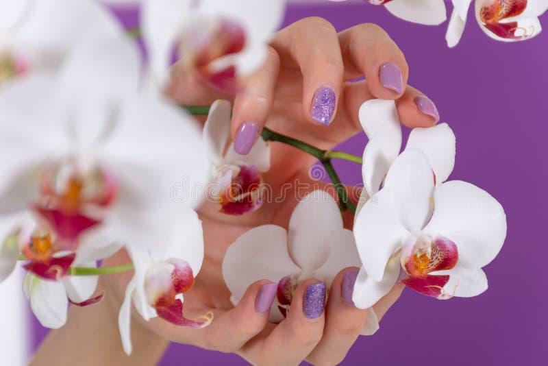De jonge vrouwelijke hand met een lilac kleurenspijkers poetst gel en de mooie decoratie van de orchideebloem op purpere achtergr stock foto