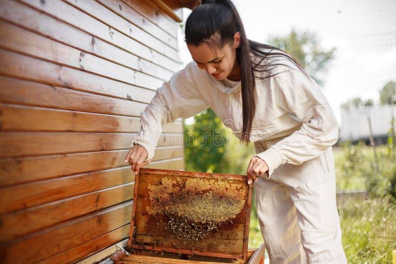 De jonge vrouwelijke imker trekt van de bijenkorf een houten kader met honingraat terug Verzamel honing Imkerijconcept royalty-vrije stock foto