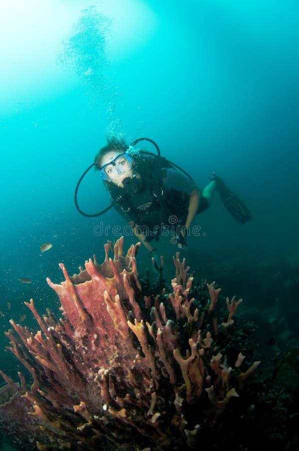 De jonge vrouwelijke scuba-duiker zwemt over ertsader royalty-vrije stock foto's