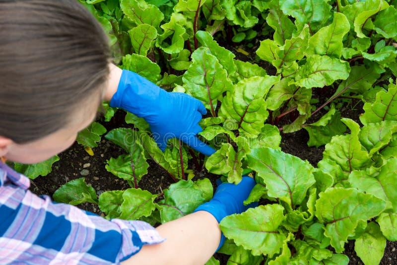 De jonge zorg van de vrouwentuinman van bloemen in de tuin Meisje die het onkruid in bloembed terugtrekken Hobbyconcept stock foto's