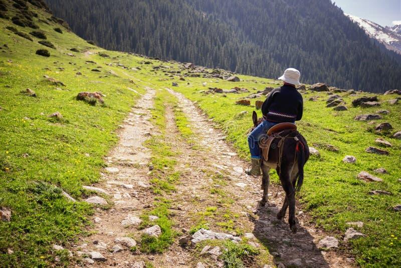 De jongen berijdt een ezel stock foto