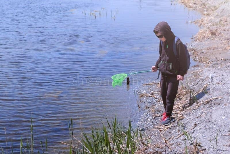 De jongen cathcing kikkers en vissen op de rivier gebruikend netto vlinder stock afbeeldingen