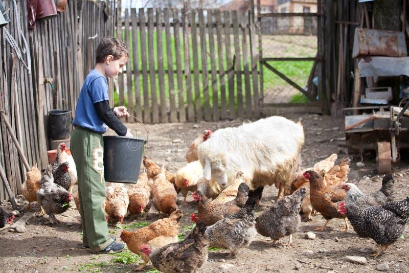 De jongen die van het land de dieren voedt