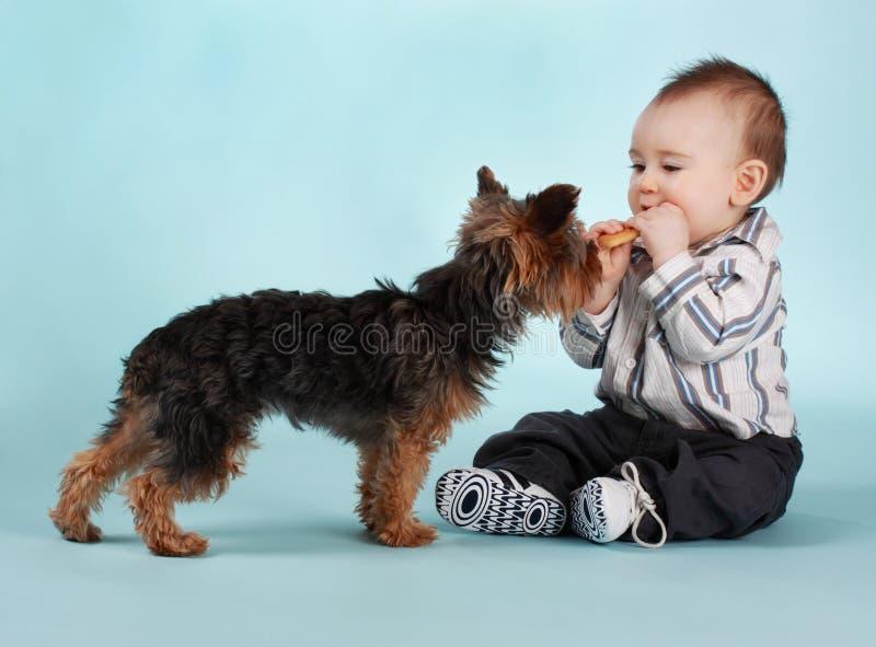 De jongen en de hond van de baby stock afbeeldingen