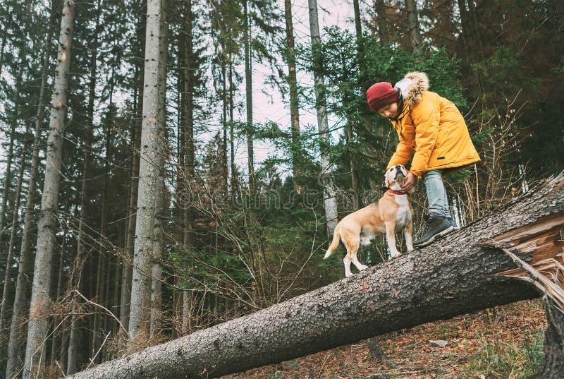 De jongen in heldere gele parka loopt met zijn brakhond in pijnboom voor royalty-vrije stock afbeelding
