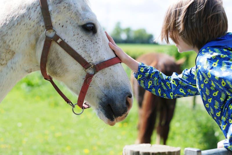 De jongen raakte het hoofd van het paard royalty-vrije stock foto