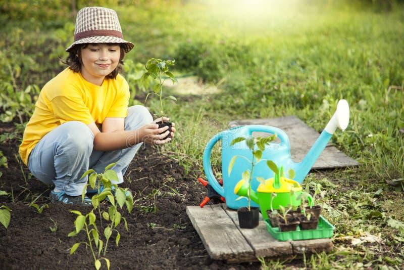 De jongen in de tuin bewondert de installatie alvorens te planten Groene Sprou royalty-vrije stock afbeeldingen