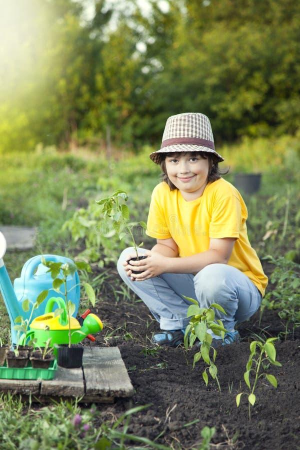 De jongen in de tuin bewondert de installatie alvorens te planten Groene Sprou stock foto