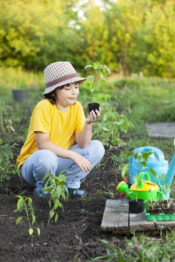 De jongen in de tuin bewondert de installatie alvorens te planten Groene Spruit in Kinderenhanden royalty-vrije stock afbeelding