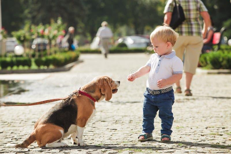 De jongen voedt de hond royalty-vrije stock foto's