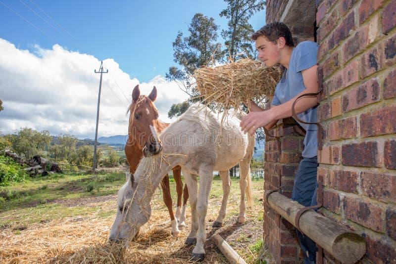 De jongen voedt paarden royalty-vrije stock afbeelding