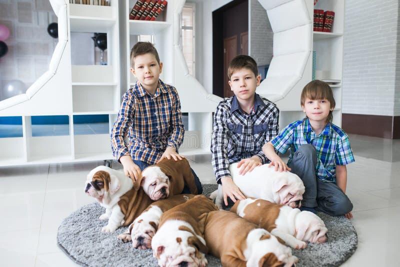 De jongens zitten met puppy van Engelse buldog op de vloer stock afbeeldingen