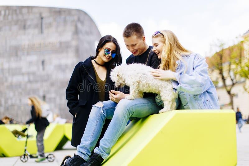 De jongeren hebt pret met de kleine hond openlucht royalty-vrije stock foto's