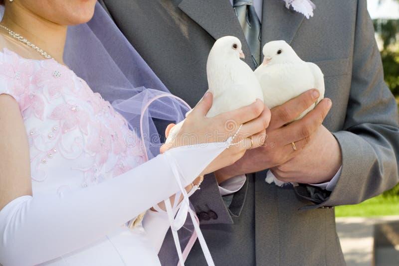 De jonggehuwden en de duif. royalty-vrije stock afbeeldingen