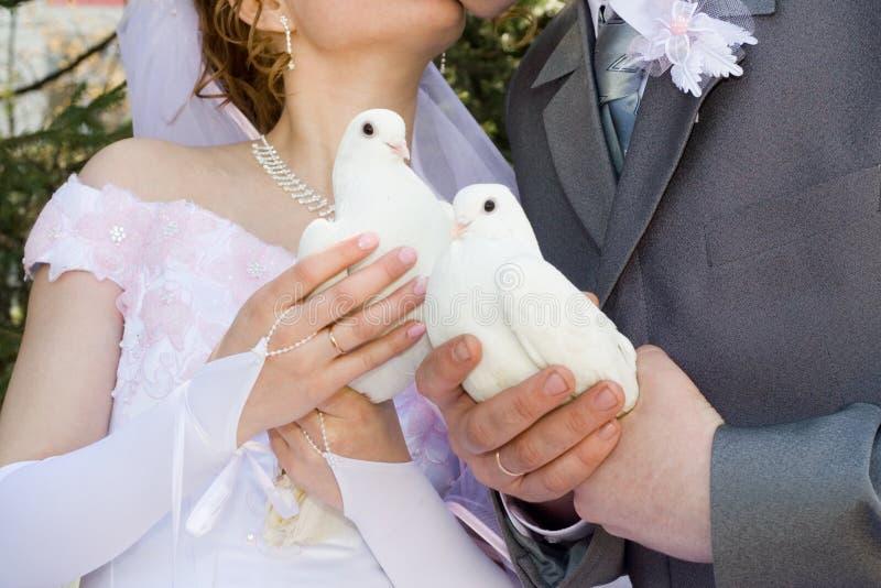 De jonggehuwden en de duif. stock afbeelding