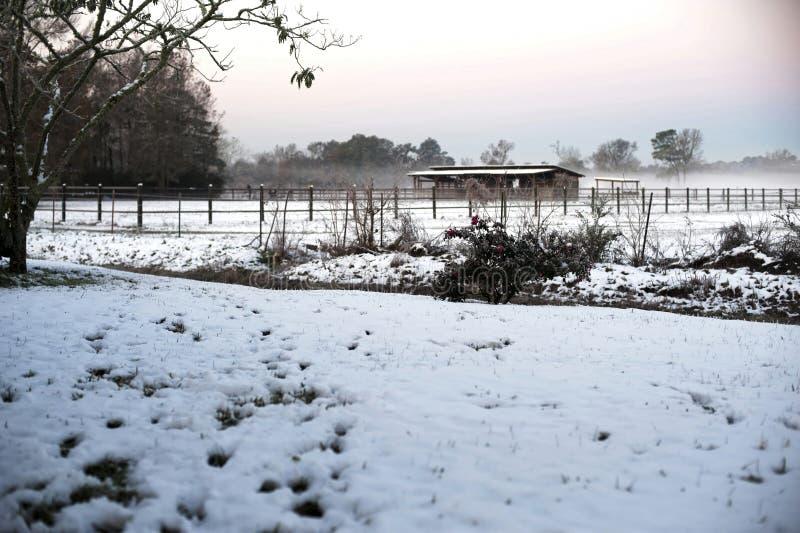 De jour étrange de neige pour la Louisiane du sud photos libres de droits