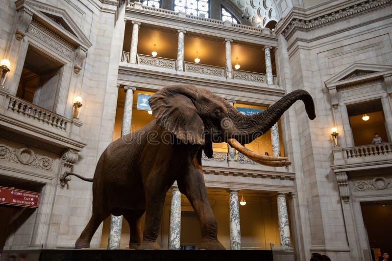 2 de junio de 2018 - Singapur, Singapur: Elefante africano en la entrada del Museo Nacional de Smithsonian de la historia natural imagenes de archivo