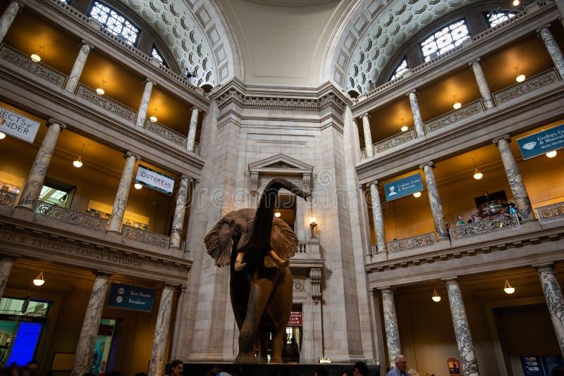 2 de junio de 2018 - Singapur, Singapur: Elefante africano en la entrada del Museo Nacional de Smithsonian de la historia natural fotografía de archivo libre de regalías
