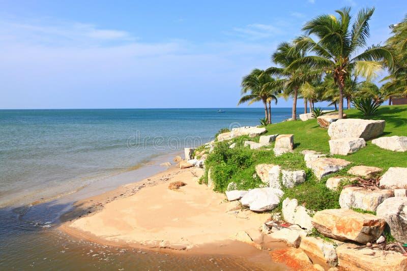 De kaap van het strand met tropische kokosnoot royalty-vrije stock foto