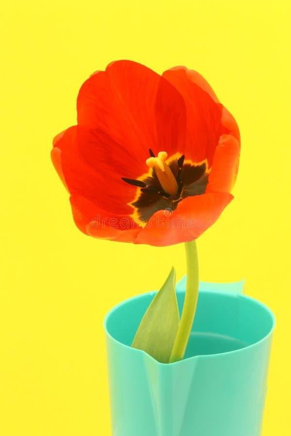 De Kaart van de Groet van de bloem met Rode Tulp - de Foto van de Voorraad stock foto's