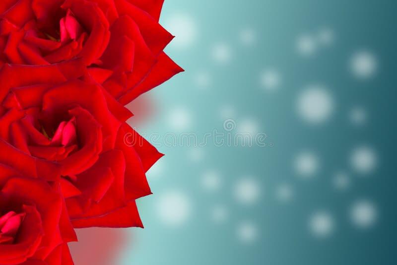 De kaart van de ontwerpcollage Rood nam mooie bloemen toe stock foto's