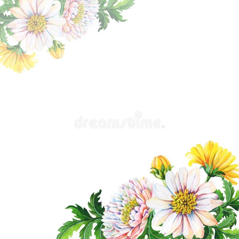 De kaart van de waterverfgroet, uitnodiging met chrysanten op een witte achtergrond De zomer, de herfst bloemen stock illustratie