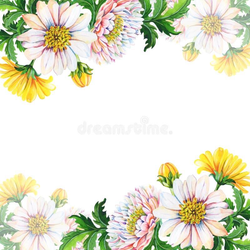 De kaart van de waterverfgroet, uitnodiging met chrysanten op een witte achtergrond De zomer, de herfst bloemen vector illustratie