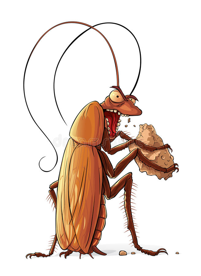 De kakkerlak eet royalty-vrije illustratie