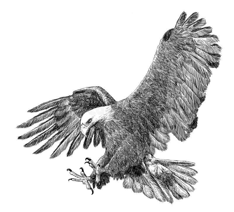 De kale de aanvalshand van de adelaarsduikvlucht trekt schets zwarte lijn op witte achtergrond vector illustratie