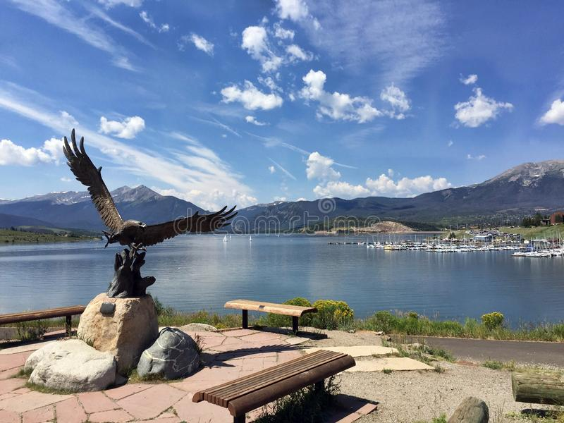 De Kale adelaar in Dillon Lake royalty-vrije stock fotografie