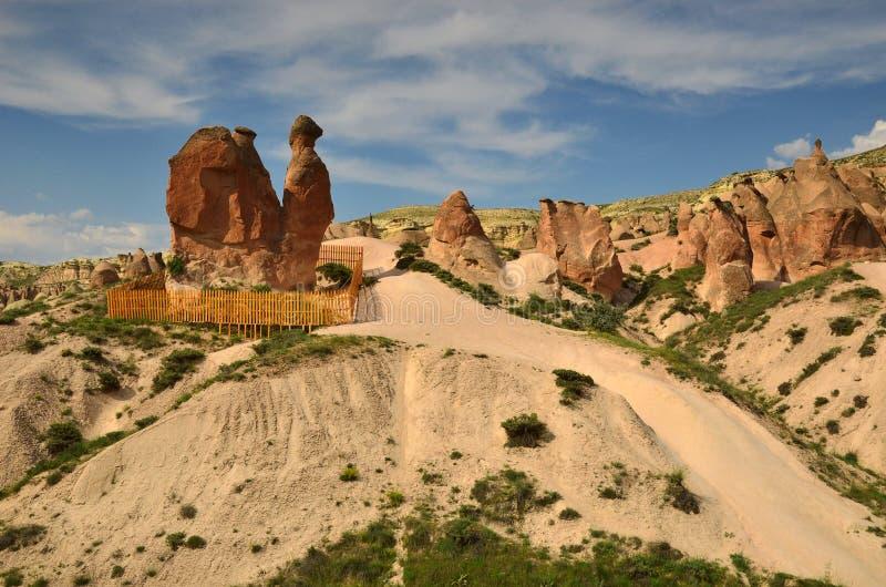 De Kameel, Cappadocia stock afbeelding